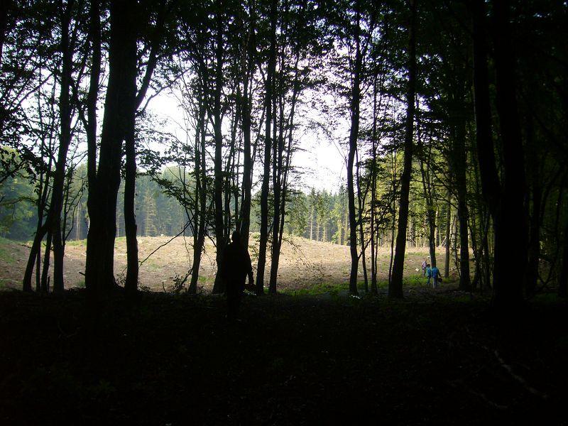 Das Herrenholz bei Sternberg war das Ziel unserer heutigen Pilzwanderung. Hier gibt es weitläufige Buchenwälder reichlich Nadelwald mit Kiefern und Fichten. 25.08.2012.