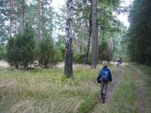 Und weiter geht es durch dieses herrliche und einmalige Gebiet. Zwischen den Kiefern wachsen immer wieder reichlich Wacholderbüsche. Wo sieht man solche Wälder noch?