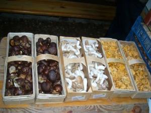 Zu den eingekauften Maronen, Kräuter - Seitlingen und Pfifferlingen gesellte sich noch vielfältige Waldpilze, die viele Sammler für die energireiche Pilzpfanne spendeten.