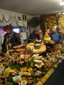 Da wir den Eintrittspreis für unsere große Ausstellung auf 2 Euro angehoben haben, war das gedrdängel zwar nicht si dicht wie in den Vorjahren, dafür kamen aber vorwiegend Leute, die wirkliches Interesse an einer vielfältigen Pilzsschau hatte.
