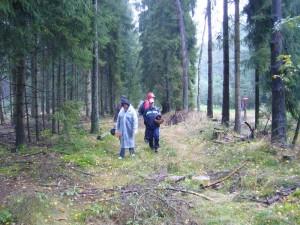 Mit wasserdichter Regenbekleidung oder aber mit dem Regenschirm ausgestattet, konnte uns der teils kräftige Dauerregen in diesem schönen Wald kaum etwas anhaben.
