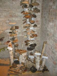 In der Eingangsecke begrüßten den Besucher wie immer kleine Pilzbäume mit den verschiedensten Porlingen.