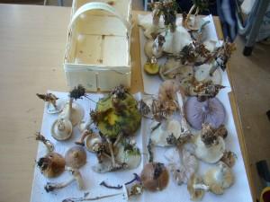 Im Klassenzimmer angelangt, wurden die Fundstücke auf den Tischen ausgebreitet und die wichtigsten von ihnen nochmals vorgestellt.