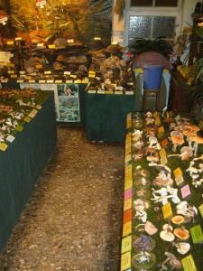 Das letzte mal in dieser Saison habe ich unsere Ausstellung nochmals mit 180, überwiegend Frischpilzarten bestückt und sie ist noch einmal besonders sehenswert. Insbesondere auch deshalb, weil sich ein Fersehteam angemeldet hat und am 01.11.2012 Schüler einer Wismarer Förderschule.