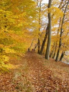 Zeitweise tauchte die tiefstehene November - Sonne alles in ein goldenes Licht. Der Herbst blühte noch einmal so richtig auf, bevor in wenigen Tagen wohl tristes Wintergrau einziehen dürfte.