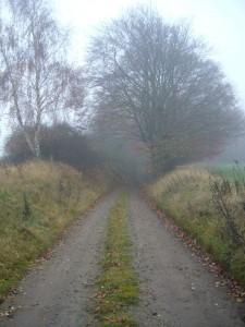 Durch diesen Hohlweg muss er kommen b.z.w. gehen, wenn er die Ortschaft Karnin und das Warnowtal von Kleefeld aus erreichen möchte.