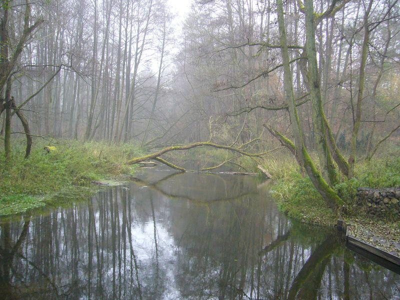 Weitgehend naturbelassen ist das Warnowtal bei Karnin. Wasserwanderer müssen mit Hindernissen rechnen, auch der Wanderweg ist nicht unbedingt zu einem ganz normalen Spaziergang geeignet. Es ist ein Naturschutzgebiet! 18.11.2012.