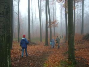 Und weiter geht es durch den nebelgrauen, mystisch - stimmungsvollen Buchenwald bei Gadebusch.