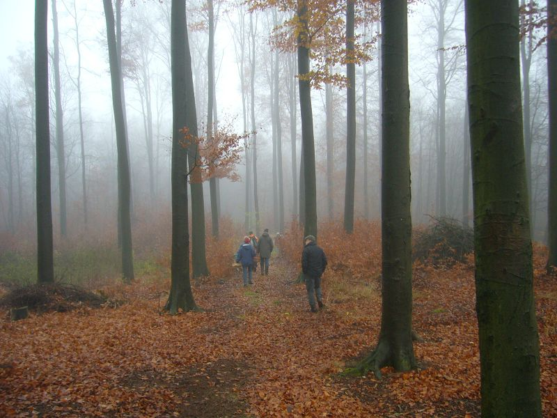 14 Pilzfreunde brachen an diesem nebligtrüben Spätherbst - Sonnabend zur letzten öffentlichen Pilzwanderung des Jahres in den überwiegend mit Buchen bestandenen Gadebuscher Stadtwald auf. Die pilzliche Vielfalt war für Ende November noch recht hoch.