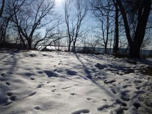 Winterlich mit Eis und Schnee präsentierte sich die Landschaft zu Ostern in Mecklenburg - Vorpommern. Die Wälder sind noch größtenteils tief verschneit und in den Nächten herrscht immer noch Frost. Dieses Foto entstand am Nachmittag des 31.03.am Ufer des Schweriner Sees.