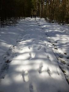 Wo die Sonne kaum hin kam stapften wir teils noch bis zu 15 cm hohem Schnee, an anderen Orten war davon kaum noch etwas zu sehen und es war in der Sonne schon richtig warm.