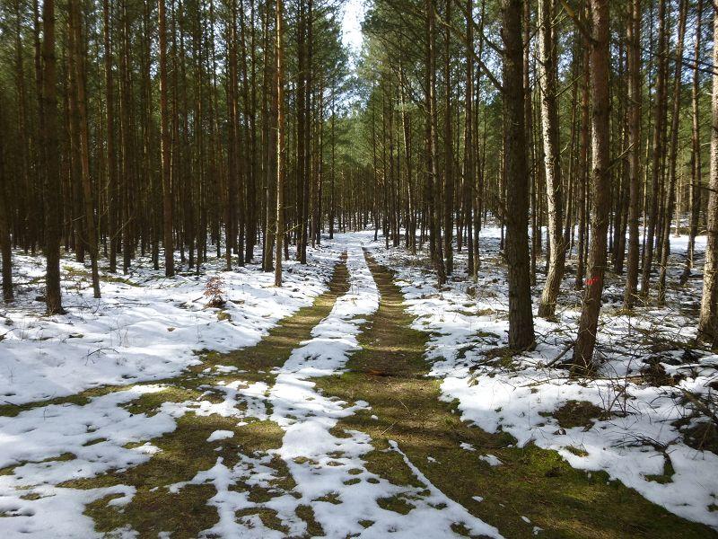 Mit Frischen Pilzen war heute nichts zu machen. Selbst für die Kälte unempfindlichen Frühjahrslorcheln war es einfach noch zu winterlich. Vielfach stapften wir noch durch eine bis zu 15 cm hohen Schneedecke!