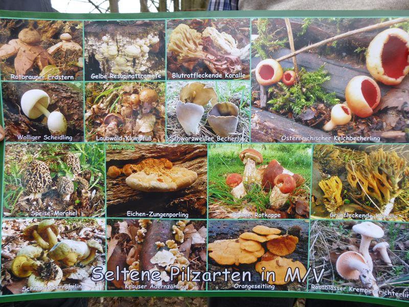 Hier eine Kostprobe. Dieses Exemplar in Poster - Größe schenkte mir Klaus und es wird einen würdigen Platz im Steinpilz - Wismar gekommen. Lieber Klaus, herzlichen Dank!