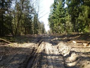 Holzeinschlag ist natürlich eine unglaublich schwere Arbeit, die duch die Maschienen wesentlich erleichtert wird. Aber seit dem diese Technik zum Einsatz kommt, werden unsere Wälder immer mehr verjüngt und richtige, urwüchsige Wald- und Forstgesellschaften immer seltener. Hier sah es noch im vergangenen Jahr richtig mahlerisch aus mit wunderschönen, Moos- und Pilzreichen Wegrändern und im Waldesinneren konnte man die herrlichsten Pilze finden. Hier wird es wohl noch dauern, bis es hier wieder für uns Pilzfreunde richtig attraktiv sein wird.