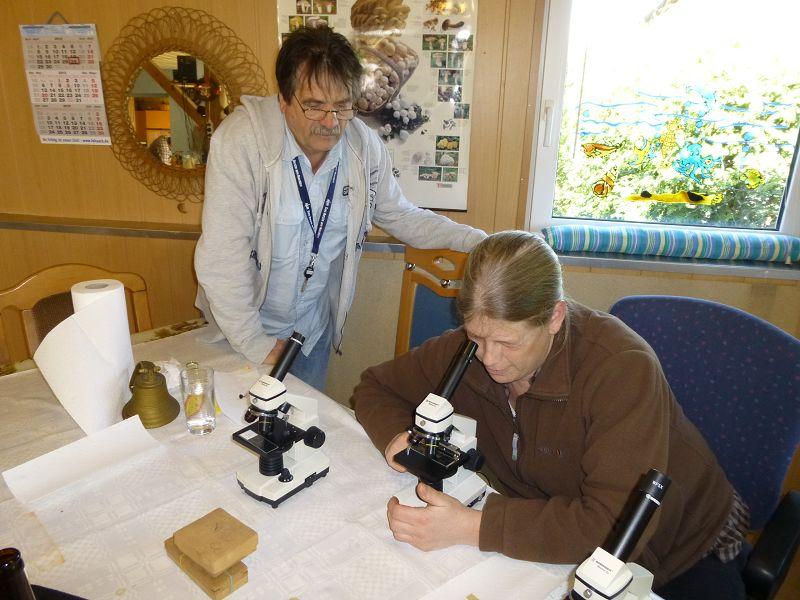 Anja und Gerhard machen sich am Mikroskop zu schaffen. Wunderbar können hier die Schläuche unserer Lorcheln und Morcheln analysiert werden oder die riesigen Sporen der warzigen Hirschtrüffel bewundert werden. In ihrer kugeligen Form mit dunkelbrauner Färbung und der warzigen Oberflächenstruktur ähneln sie in verblüffender weise ihren entstammenden Fruchtköepern.