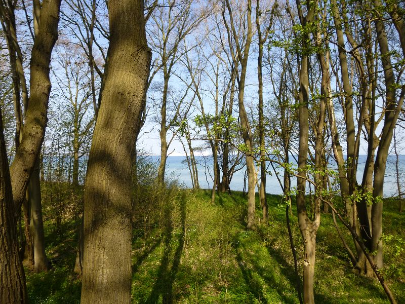 Blick durch den Küstenwald auf die Lübecker Bucht.