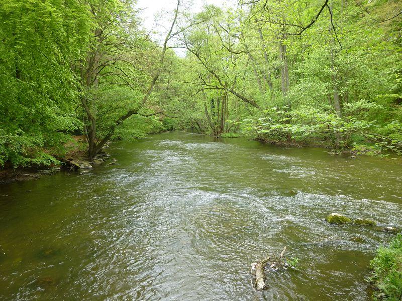 Die Warnow ist hier schon besonders breit und dennoch mit hoher Fließgeschwindigkeit. Besonders bei erhöhtem Wasserstand schon fast ein Wildwasser mit erhöhtem Anspruch an Wasserwanderer.
