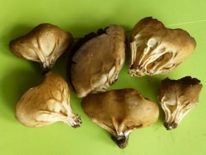 Hunderte dieser Hochgerippten Becherlorcheln (Helvella acetabulum) fand Irena mit ihrer Wandertruppe gestern im Schwerin zwischen Rindenmulch. Ich habe einige von ihnen heute im Laden fotografiert. Eigentlich, und das wird hier sicher auch der Fall gewesen sein, benötigt sie kalkreiche Böden und der Holzschredder lag vieleicht nur zufällig hier, begünstigte aber durch besonders gutes Mikroklima ihr Massenwachstum. Die Pilze sollen essbar sein, aber wahrscheinlich roh giftig!