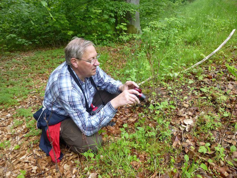 So bieten sich heute immer wieder schöne Pilzmotive zum Fotografieren. Hier sehen wir Wolfgang Schellberg aus Grevesmühlen beim Fototermin mit den ersten Breitblättrigen Rüblingen des Jahres.