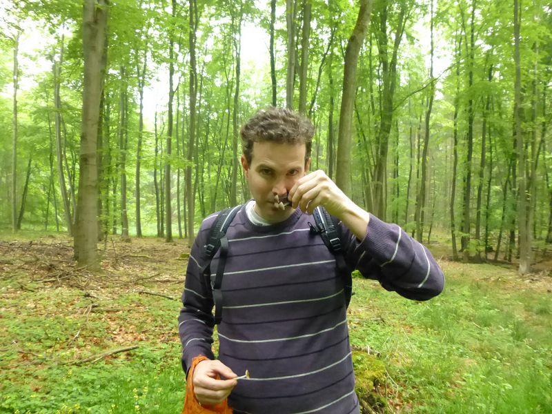 Bei der Zuordnung und Bestimmung vieler Pilzarten ist auch der Geruchssinn gefragt. Armin Büttner prüft den Geruch einer kleinen Helmlingsgruppe.