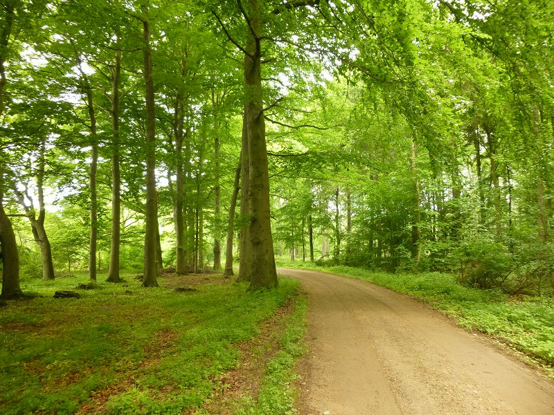 Durch das Hundehagener Holz bei Kröpelin führte uns unsere Pilzwanderung zum metereologischen Sommerbeginn. Die Frühlingspilze klingen nun langsam ab und die sommerliche Pilzflora beginnt sich zu entwickeln.