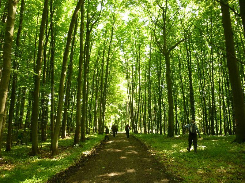 Und weiter geht es bei dem sonnigen Frühsommerwetter durch einen lichtdurchfluteten Laubwald, wo dass frische grün einen herrlichen und stimmungsvollen Kontrast zum warmen Sonnenlicht bietet.