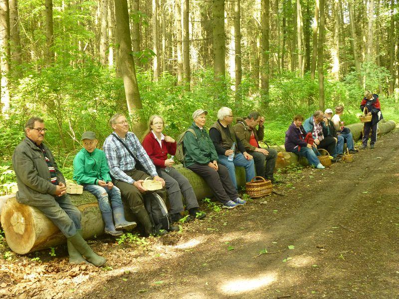 Wie in fast allen anderen Wäldern und Forsten wird unaufhörlich Holzeinschlag im großen Stil betrieben. In diesem Falle bot sich dadurch die Möglichkeit einer kleinen Verschnaufpause aus diesem langen Eichenstämmen, die zum Abtransport am Waldweg gelagert werden.
