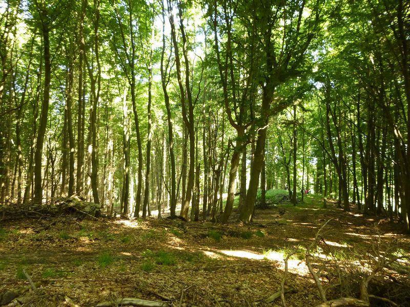 Die Kühlung ist ein bewaldeter Höhenzug in unmittelaber Ostseenähe zwischen der mecklenburgischen Kleinstadt Kröpelin und dem Ostssebad Kühlungsborn. Mächtige Buchenwälder, Fichtenforste und feuchtere Senken mit Erlen und tief eingeschnuttene Bachtäler machen dieses Waldgebiet zu einem der schönsten, aber auch anspruchsvollsten Wandergebieten in Mecklenburg - Vorpommern.