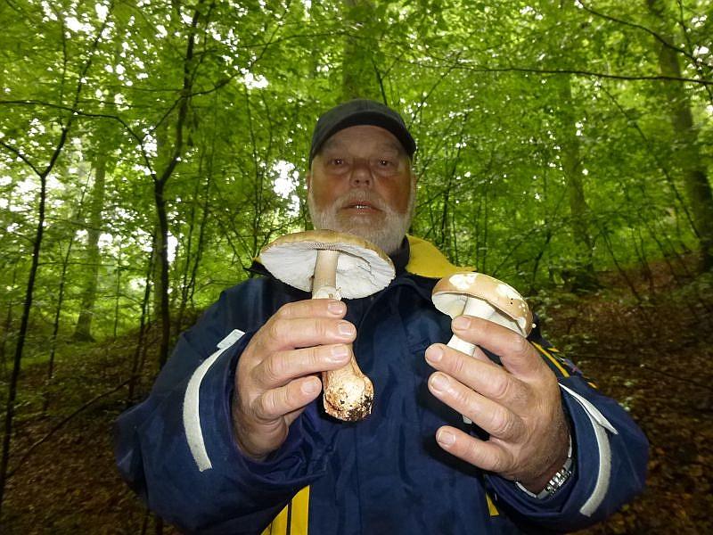 Auch diese beiden wunderbaren Pilze dürfen in den Speisepilzkorb gelegt werden. Es handelt sich um einen Perlpilz und einen Kurzstieligen Leder - Täubling.