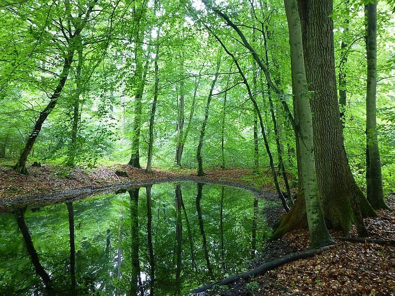 In den imposanten Laubwaldbeständen finden sich auch immer wieder derartige Feuchtbiotope, an deren Rändern es besonders interessant sein kann.