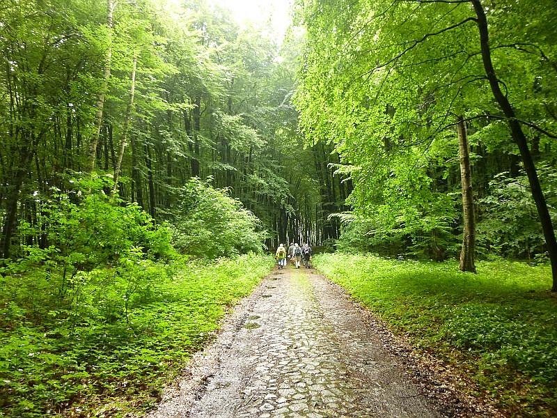 Und weiter ging es auf einem mittelalterlich anmutenden Kopfsteinpflasterweg durch die herrlichen Laubwälder des Babster Sackes in Richtung Babst.