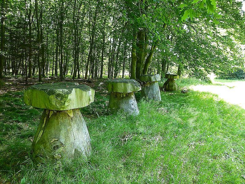Aber dann an der Waldkannte wahre Giganten aus der Gattung Boletus. Eine wunderschöne Idee und ein überraschender Anblick nicht nur für eingefleischte Pilzfreunde.