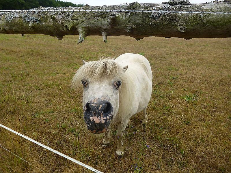 Dabei wunderte sich anscheinend dieses Ponny vom benachbarten Reiterhof Klein Warin über uns. Was die wohl vorhaben? Wollen die vieleicht einen Ausritt hoch zu Roß?