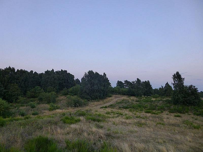 In dem sandigen und Hügeligen Gelände wechseln offene Trockenrasen und hiedegebiete, die teils von Schafen (Heidschnucken) offen gehalten werden mit Ginsterflächen und kleineren Baumgruppen ab.