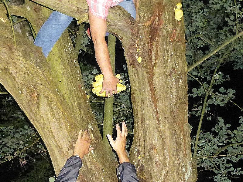 Dann heißt es Vorsicht und aufgepaßt. Von unten strecken sich die Hände nach oben, um die frische Ernte entgegen zu nehmen.