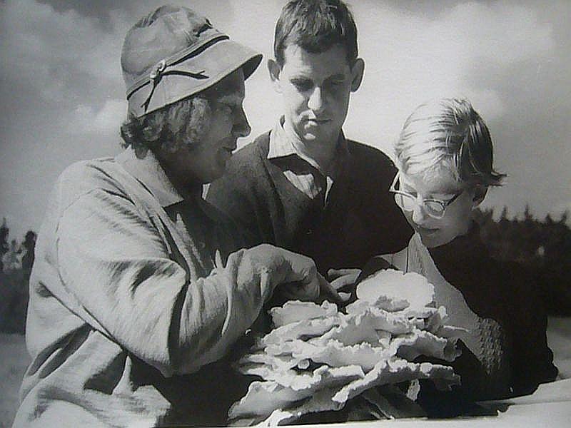 Hier eine Aufnahme aus den 1960er Jahren. Fräulein Heinrich (links) erläutert wissenswertes zum Schwefelporling. In der Mitte sehen wir unseren dienstältesten, noch lebenden Pilzfreund Hans - Jürgen Wilsch, der auch heute noch kaum eine Pilzwanderung ausläßt und auch bei anderen Aktivitäten den Steinpilz - Wismar tatgräftig unterstützt.