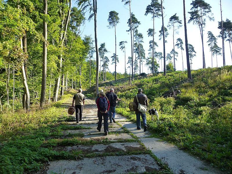 Von Blankenberg bis zur Friedrichswalder Weiche führte uns die heutige Pilzwanderung. Bei schönstem Spätsommerwetter wanderten wir duch abwechslungsreiche Laub- und Nadelwälder.