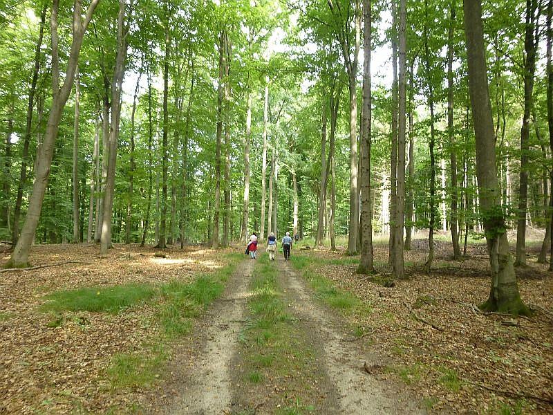 Langsam, aber sicher neigt sich unsere Exkursion durch einen wunderschönen Buchenwald dem Ende entgegen.