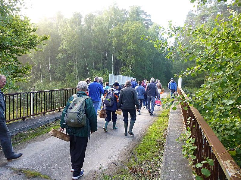 Wir überquerten die Eisenbahnbrücke und waren sofort im pilzreichen Revier.