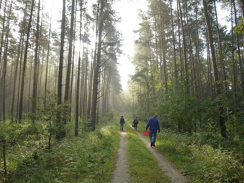 Wunderbare, frühherbstliche Stimmung heute im Sültener Forst. Nach dem die Sonne den flachen Nebel weg geheizt hatte, strahlte sie vom blauen Himmel.