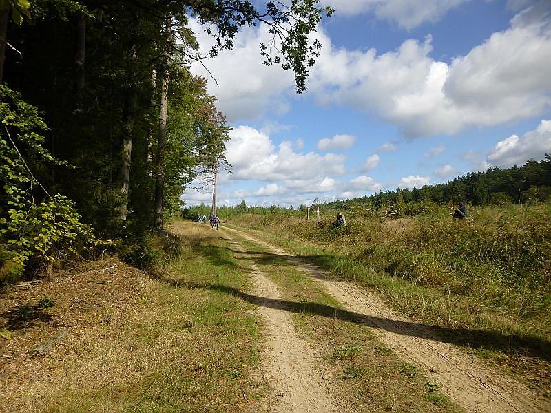 Und weiter führt uns unser Weg durch den Sültener Forst bei wunderbarem Frühherbstwetter. Hier wurde großflächig abgeholzt und wieder neu aufgeforstet. Derartige, große Kahschläge waren früher gang und gebe, in der modernen Forstwirtschaft aber eher die Ausnahme.