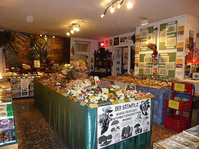 Zum 21. mal fand an diesem Wochenende in der Hansestadt Wismar wieder unsere traditionelle Großpilzausstellung statt. Mit 264 Pilzarten waren alle unsere Ausstellungsflächen voll beklegt. 29.09.2013.