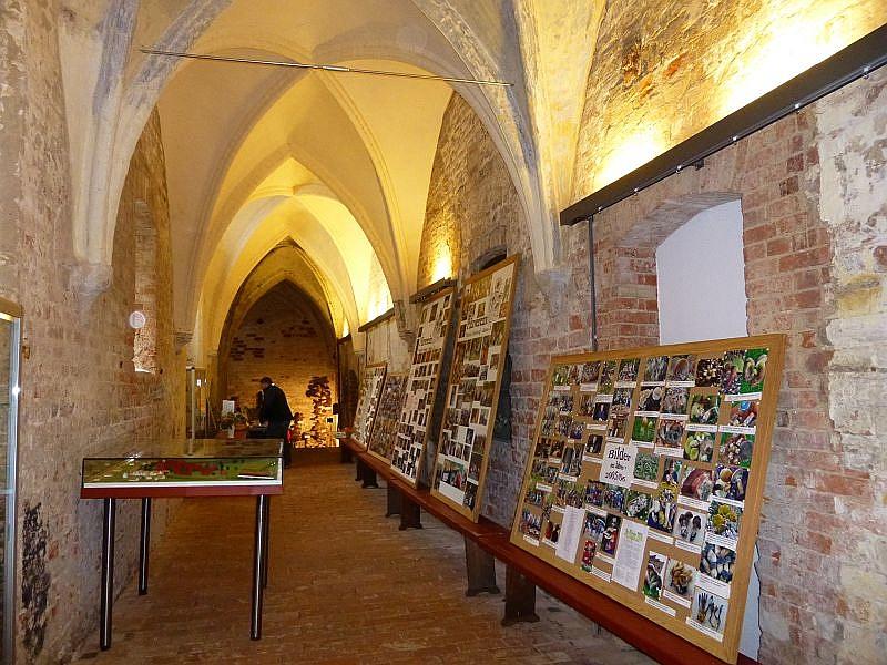 Gleich im ersten Kreuzgang vor der eigentlichen Ausstellung kündeten riesige Schautafeln mit unzähligen Fotos von den Aktivitäten des Pilzvereins in zurückliegenden Jahren.