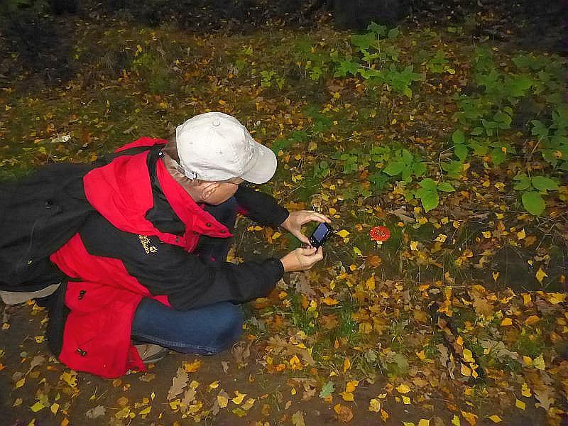 Ein beliebtes Fotomotiv bildet immer wieder der Rote Fliegenpilz (Amanita muscaria).