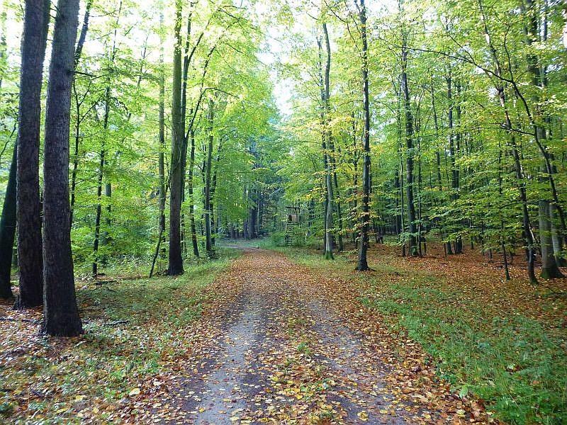Der Lübberstorfer Forst bei Neukloster zählt zu unseren guten Buchenwaldstandorten. Natürlich gibt es hier auch Nadelwaldbereiche und Erlenbrüche, die das Artenspektrum erweitern.