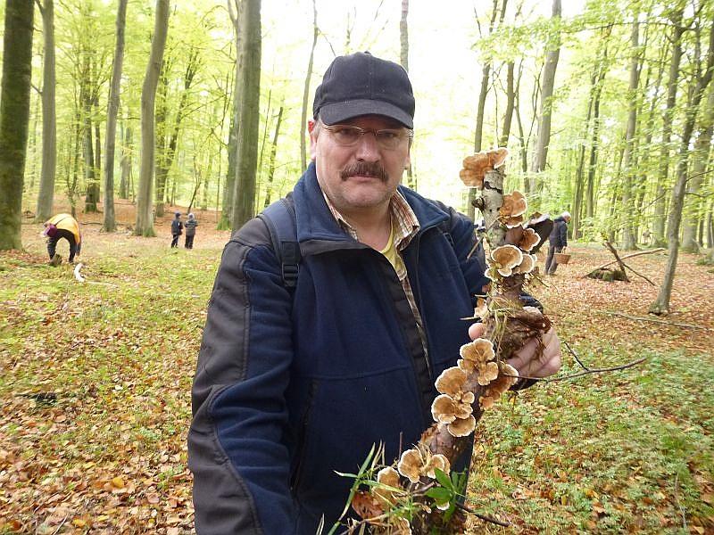 Tommi aus Berlin zeigt stolz einen Laubholzast, der von zahlreichen Fruchtkörperkonsolen der Schmetterlings - Tramete besetzt ist. Er wird sie mitnehmen, trocknen und Teepulver daraus machen, da der Schmetterlings - Tramete heilende Wirkung zugesprochen wird.