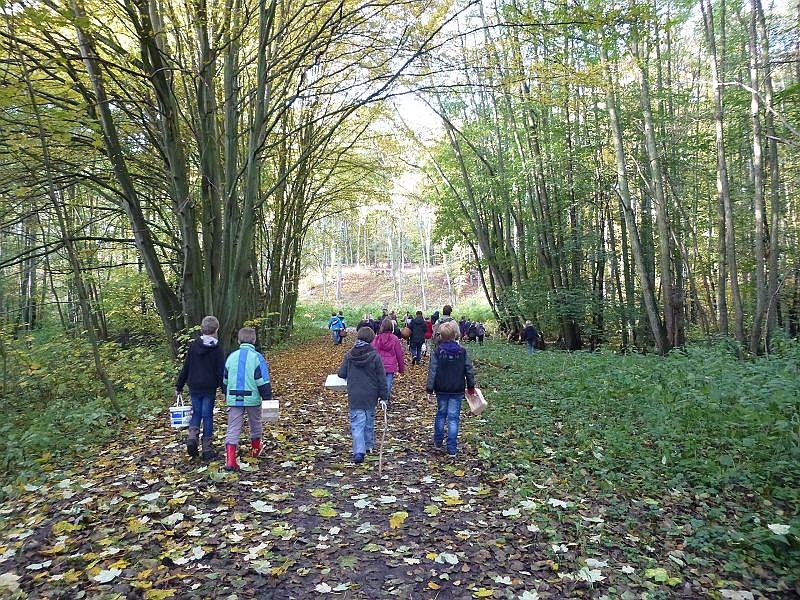 Und weiter geht es durch den immer lichter werdenden Herbstwald.