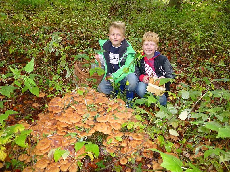 Und wieder eine riesiges Hallimasch - Depot haben diese beiden Jungs entdeckt. Mama und Papa werden aber staunen, wie viele Pilze wir heute gefunden haben.
