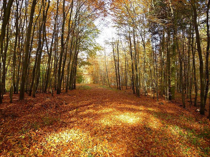Bei goldenem Oktoberweter und spätsommerlichen Temperaturen hatte der Steinpilz - Wismar wieder zu einer geführten Pilzwanderung eingeladen. Die Torfheide zwischen Crivitz und Mestlin war unser Ziel.