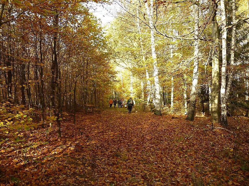 Am frühen Nachmittag neigte sich dann unsere Wandertour durch die Torfheide dem Ende entgegen. Inzwischen hatte die goldene Oktobersonne die Luft derart erwärmt, dass wir über den Schatten der Bäume richtig froh waren.